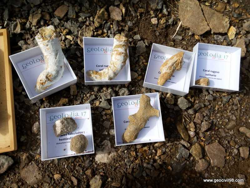 Fósiles de corales