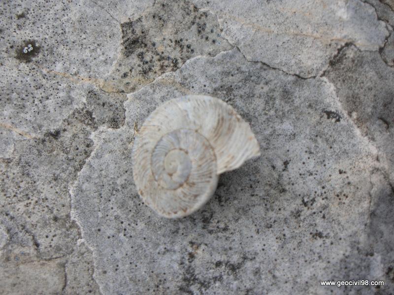 Caracol plano, Torcal de Antequera, departamento de geología de Geocivil 98