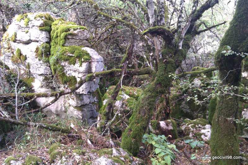 Musgo, Torcal de Antequera, departamento de medio ambiente de Geocivil 98